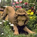 ... truant lion ...  (Click here to enlarge)