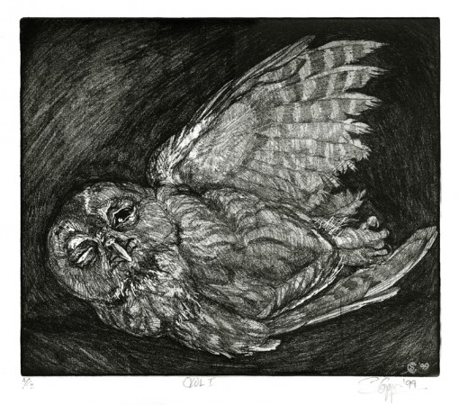 � this young owl should not have been out after daylight � (Click to enlarge)