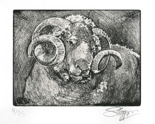 ... Irish ram ...  (Click to enlarge)