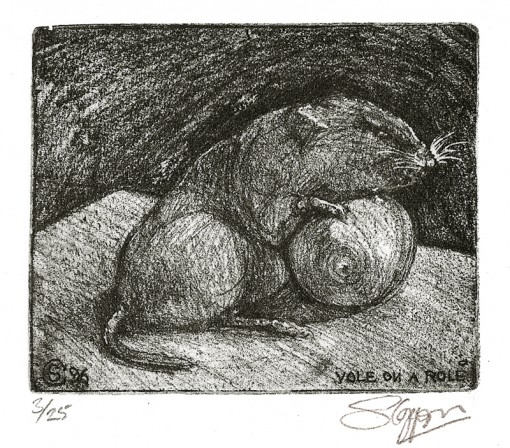 ... study of a Bank Vole ...  (Click to enlarge)