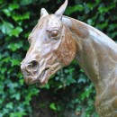 A racehorse is standing being washed down on a cold October morning. The cold water comes as a shock!